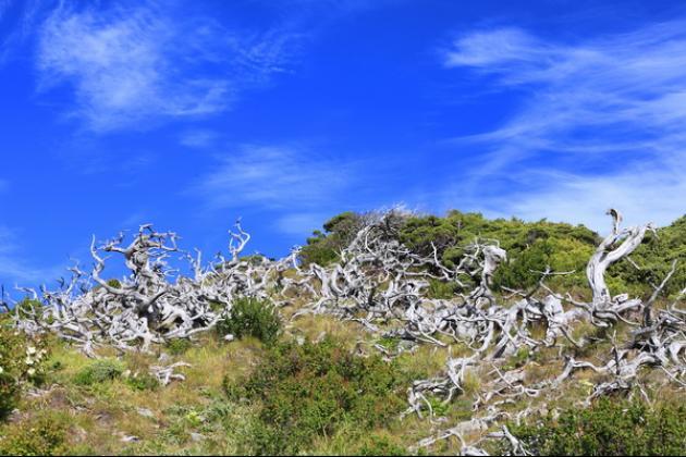 雪山主東峰3日行-百岳次高山 1
