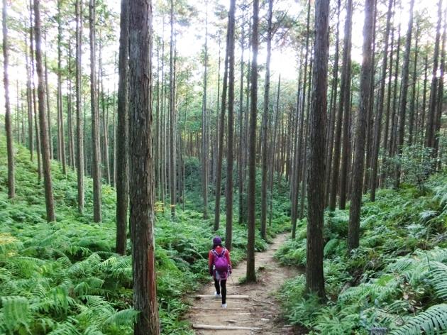世界文化遺產~熊野古道健行●高野山7日 3